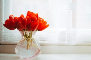 Red tulips in glass vase.