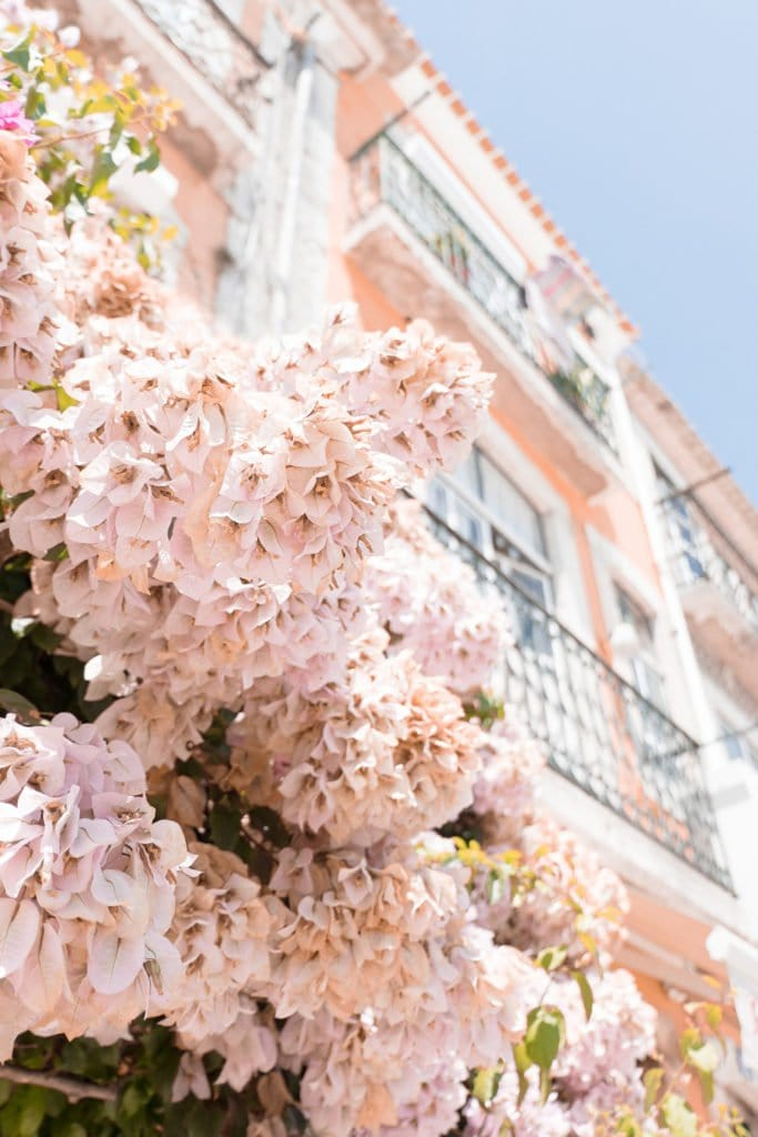 Close-up of pretty pink florals against a peach colored building.