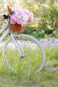 Pink peonies in a basket on a white bike.
