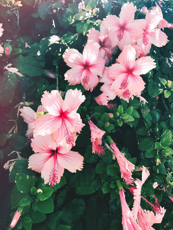 Self-love ideas: visit a flower shop.