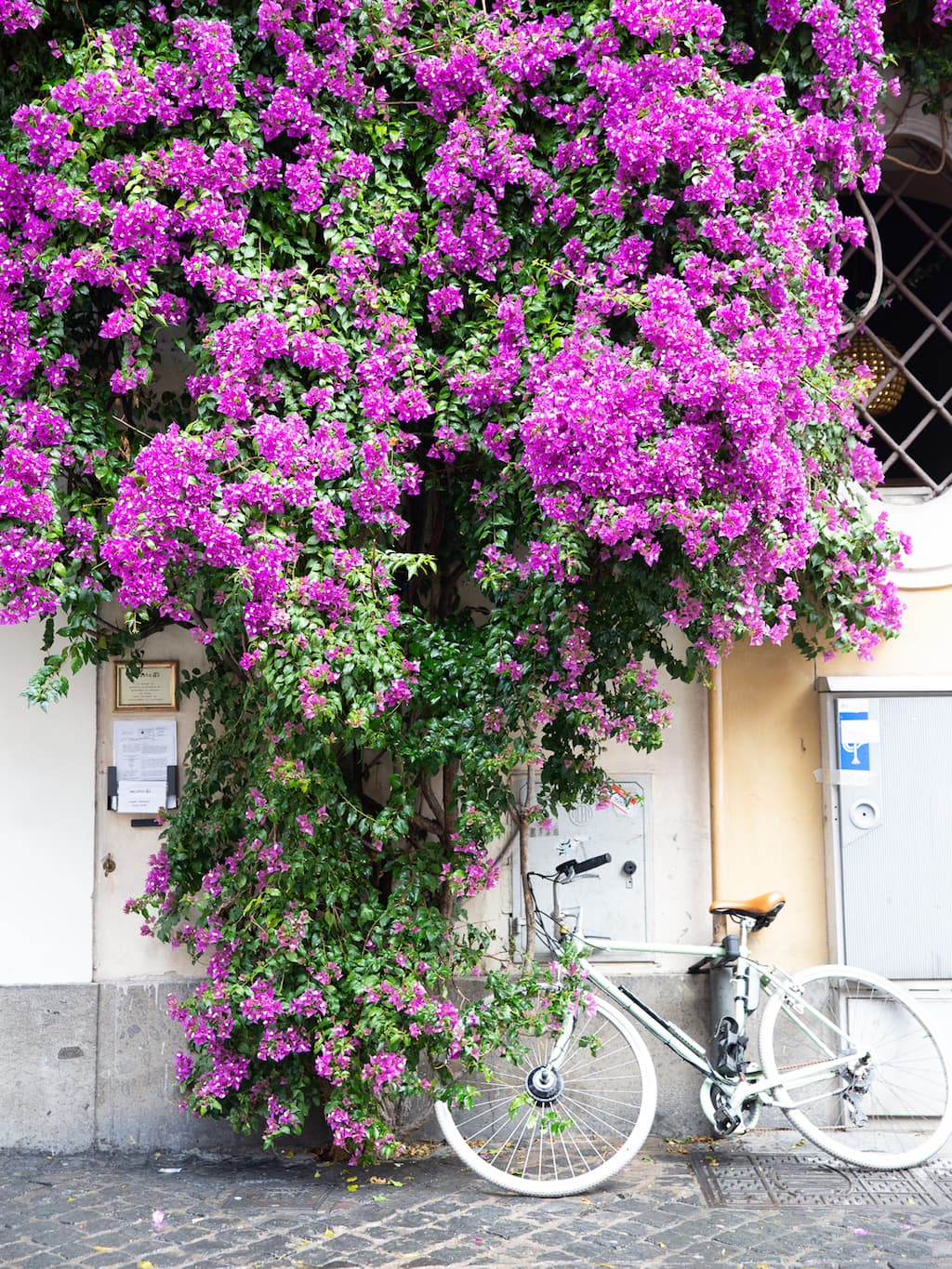 bike and purple flowers