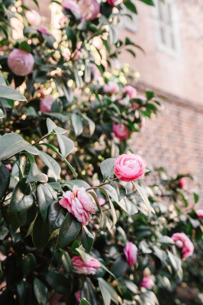 Pink Flowers Outside | Spring Bucket List